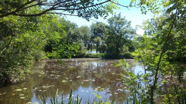 Construire à Vertou -  Parc du Loiry, Petit Plan dEau